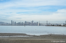 San Francisco from Middle Harbor Shoreline Park