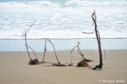 Point Reyes - Limantour Beach