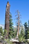 Yosemite: near May Lake