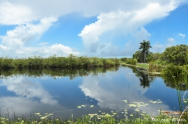 The Everglades: Anhinga Trail