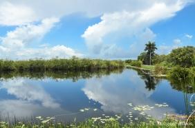 The Everglades: Anhinga Trail