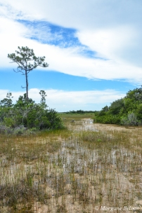 The Everglades: Mahogany Hammock Trail