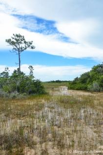The Everglades: Mahogany Hammock Trail