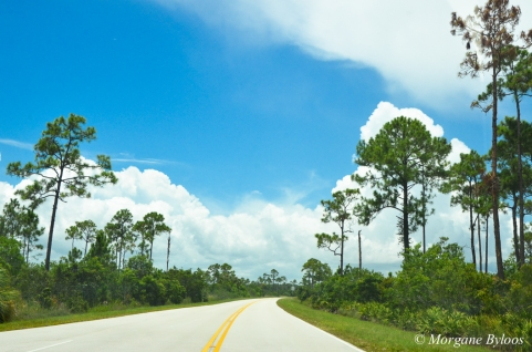 The Everglades: the main road
