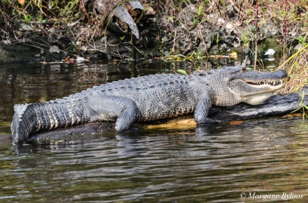 Jean Lafitte Swamp Tours