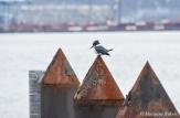 Tacoma: Kingfisher