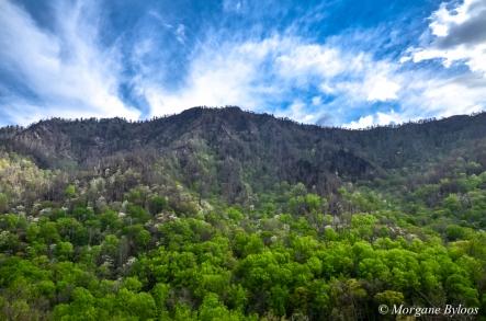 Great Smokey Mountains