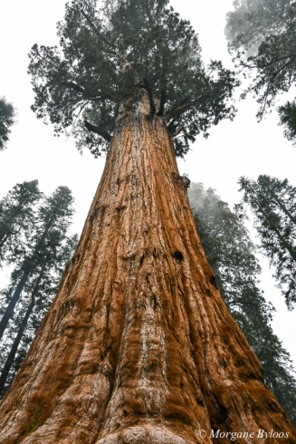 Sequoia National Park: General Sherman