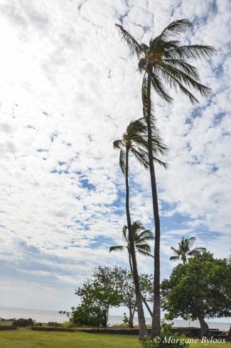 Waimea, Kauai, HI
