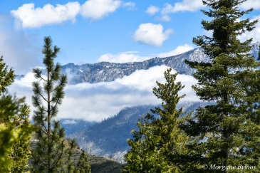 Giant Sequoia National Forest