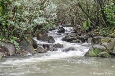 Kauai: Limahuli Stream