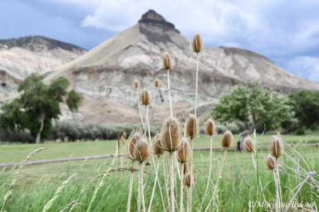 John Day Fossil Beds: Sheep Rock