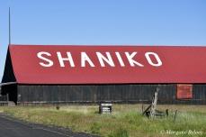 Shaniko, OR