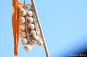 40th Gilroy Garlic Festival