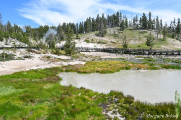 Yellowstone: Mud Volcano Area