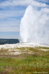 Yellowstone - Old Faithful during the eruption