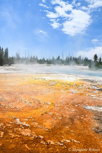 Yellowstone - West Thumb Geyser Basin - Black Pool