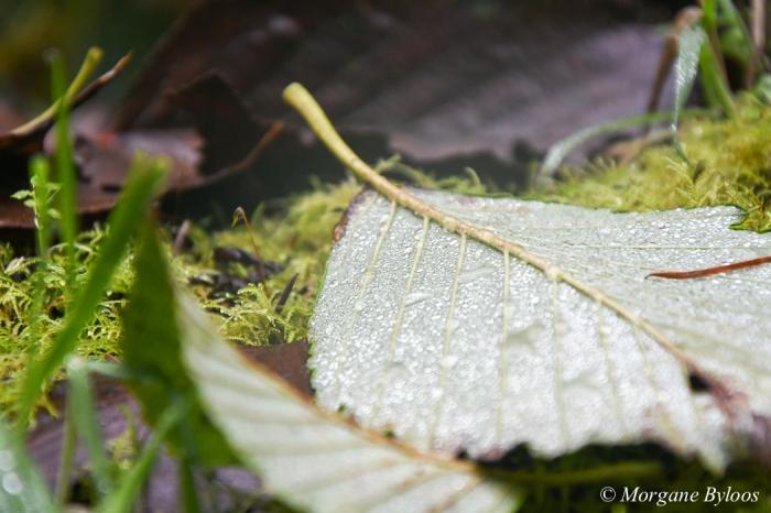 La photo du mois: the rain