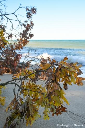 Indiana Dunes NP: Mount Baldy