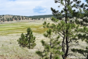 Florissant Fossil Beds NM