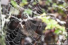 Mendocino County - Van Damme State Park