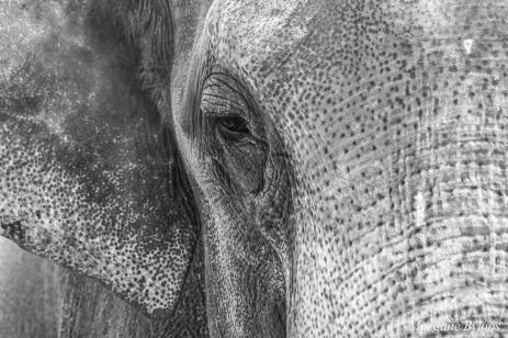 Denver Zoo - Asian Elephant