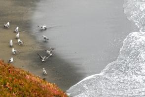 Mussel Rock Park Beach